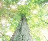 森林が果たす役割 1.フジモクが日本の木を使った家を建てることの意味