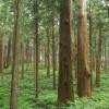 森林が果たす役割 2.フジモクが日本の木を使った家を建てることの意味