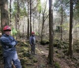 【日本の森林の話~静岡県の森林で育まれた木を使う②】/ 富士・富士宮・三島 フジモクの家
