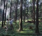 【木造住宅のつくり方(工法)の話】/  富士・富士宮・三島フジモクの家