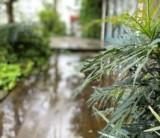 【台風と長雨対策〜富士市の情報を集めました〜】