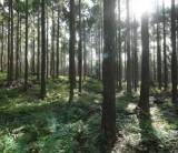 富士山麓の森林&木の家体感バスツアー