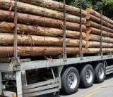 「ウッドマイルズ」のお話 ①~フジモクが日本の木を使った家を建てることの意味