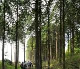 「日本の森林の話②~地球の自然保護のため、使うため」